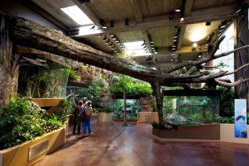 SF Zoo So. American Tropical Rainforest & Avairy